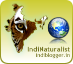 IndiBlogger Badge